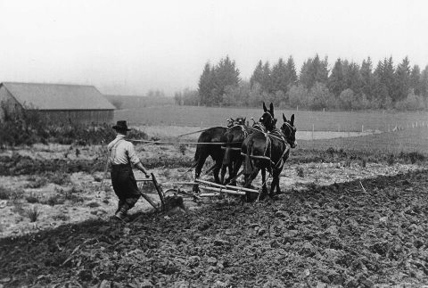 Image result for farm mule plow